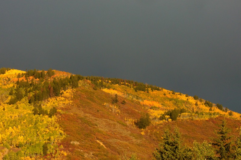 Sun on the fall hillside, with an evening storm looming, provide great colors!
