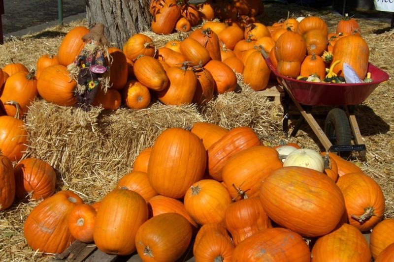 Pumpkin Patch at Aspen Community Church
