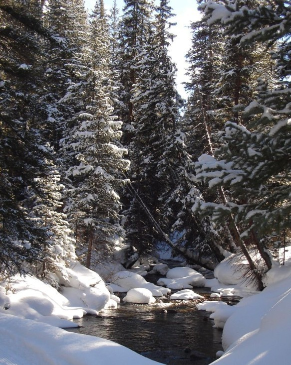 Snowy Winter Stream And Trees