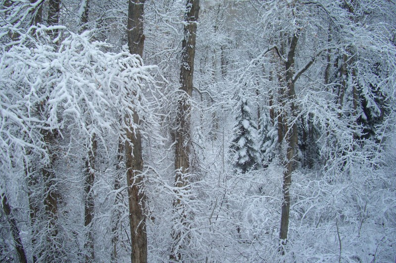 First major snowfall of the season, as seen from my bedroom window this morning!