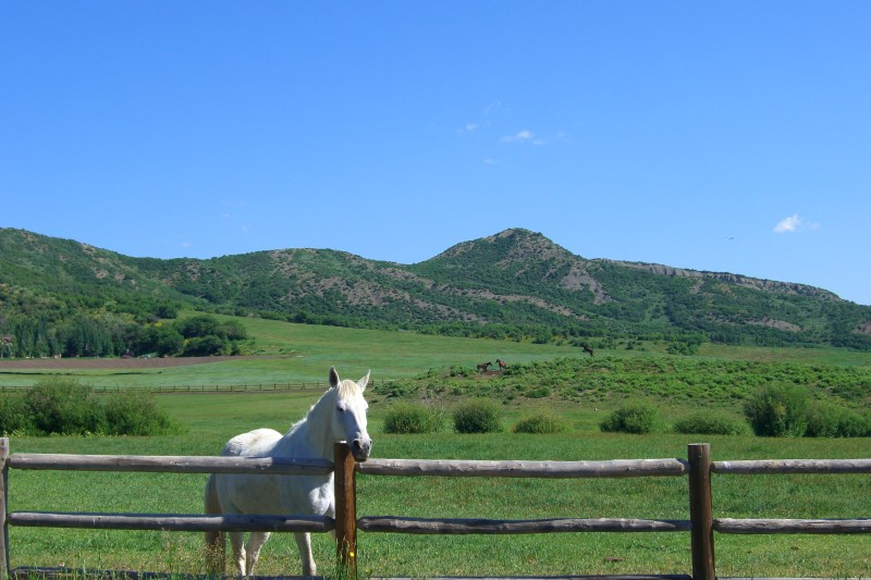 a horse says hello on Owl Creek Road, on Independence Day.